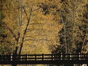 Golden Trees Surround a Footbridge by Marc Moritsch
