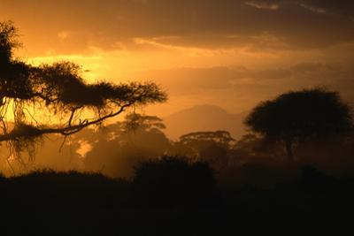 Silhouetted acacia trees at sunset in Amboseli National Park. by Marc Moritsch