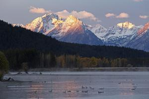 The Teton Range and the Snake River at Sunrise. a Flock of Canada Geese Rest in the River by Marc Moritsch