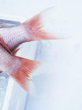 Tail Fins of Two Blue Spotted Seabream by Marc O. Finley