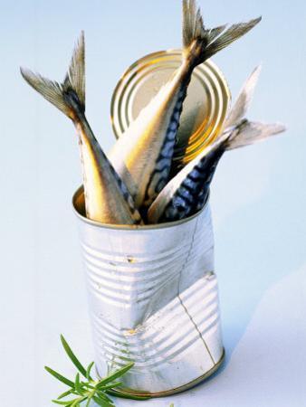 Three Fish (Mackerel) in a Tin by Marc O. Finley