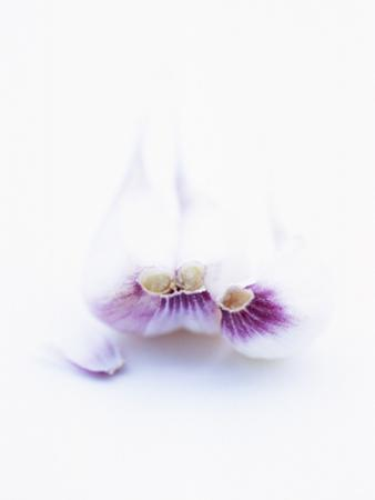 Three Unpeeled Cloves of Garlic by Marc O. Finley