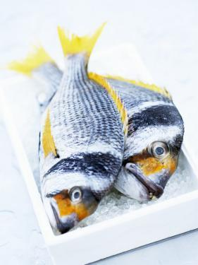 Two Yellowfin Seabream on Ice by Marc O. Finley