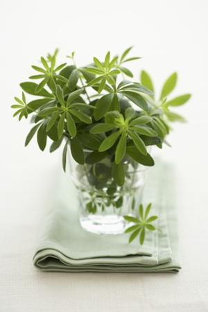 Woodruff in a Glass of Water by Marc O. Finley