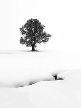Le solitaire by Marc Pelissier