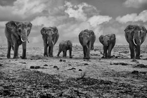 Big Family by Marcel Rebro