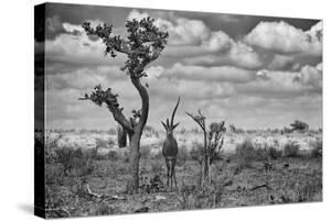 The Last Unicorn by Marcel Rebro