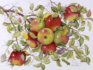 Apples by Marcia Matcham