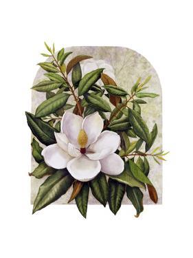 Magnolia Vignette by Marcia Matcham