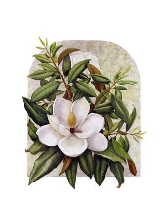 Magnolia Vignette
