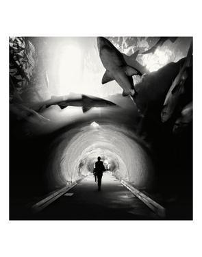 Aquarium, Study 1, Dubai, UAE by Marcin Stawiarz