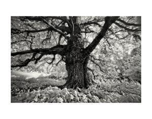 Portrait of a Tree, Study 10 by Marcin Stawiarz