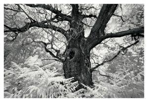 Portrait of a Tree, Study 12 by Marcin Stawiarz