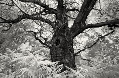 Portrait of a Tree, Study 12