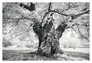 Portrait of a Tree, Study 18 by Marcin Stawiarz
