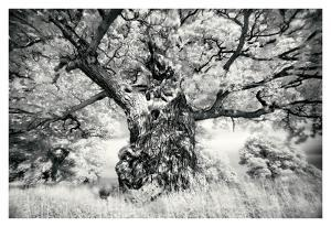 Portrait of a Tree, Study 1 by Marcin Stawiarz