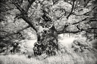 Portrait of a Tree, Study 1