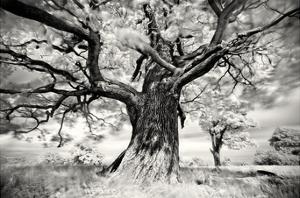 Portrait of a Tree, Study 2 by Marcin Stawiarz