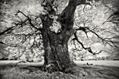 Portrait of a Tree, Study 3