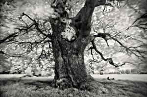 Portrait of a Tree, Study 3 by Marcin Stawiarz