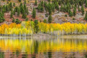 American Autumn Colors by Marco Carmassi