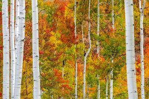 Aspen Colors by Marco Carmassi
