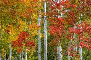 Colorado Autumn by Marco Carmassi