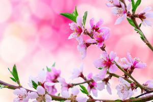 It's Spring by Marco Carmassi