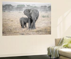 Serengeti Breakfast Time by Marco Carmassi