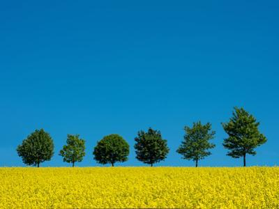 Six Trees by Marco Carmassi