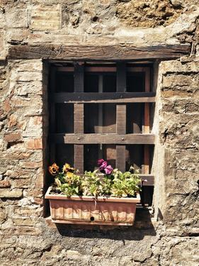 Small Window with Flowers by Marco Carmassi