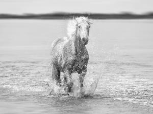Solitary Running on the Water by Marco Carmassi