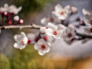 Spring Welcome by Marco Carmassi