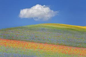 Summer Flowers by Marco Carmassi