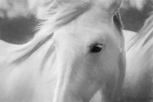 Sweet Horse by Marco Carmassi