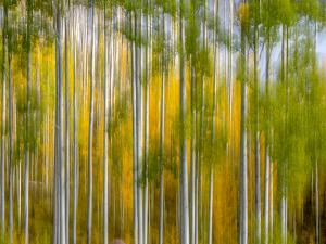 Telluride Autumn by Marco Carmassi
