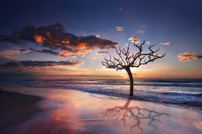 Tree in the Sea by Marco Carmassi