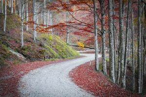 Tuscany Forest by Marco Carmassi