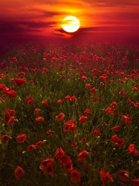 Warm Sunset by Marco Carmassi