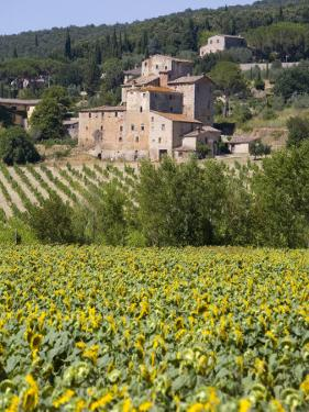 Near Siena, Val D'Orcia, Tuscany, Italy, Europe by Marco Cristofori