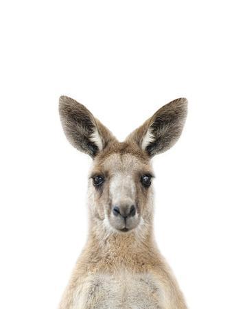 Kangaroo Friend