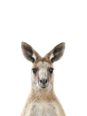 Kangaroo Friend by Marco Simoni