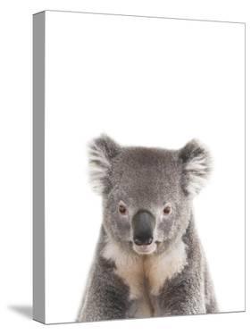 Koala Friend by Marco Simoni