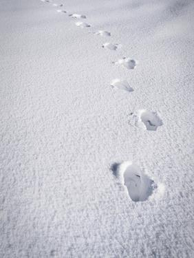 Foot Steps in the Snow, Kandel Mountain, Black Forest, Baden Wurttemberg, Germany, Europe by Marcus Lange