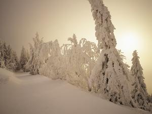 Snow-Covered Trees and Path Through Winter Landscape by Marcus Lange