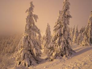 Snow-Covered Trees in Winter at Sunset by Marcus Lange