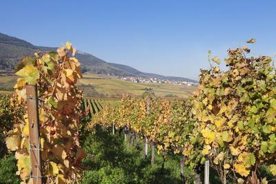 View over the Vineyards to Weyher in Autumn