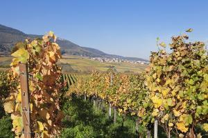 View over the Vineyards to Weyher in Autumn by Marcus Lange