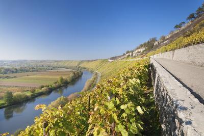 Vineyards in Autumn, Mundelsheim, Neckartal Valley