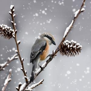 Snow Bird by Marcus Prime